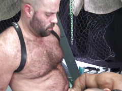 Older bear suspended during bareback fucking