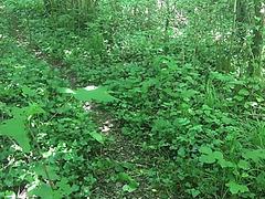 Public forest masturbation