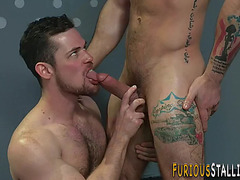 Hung stud-horse sucks rod