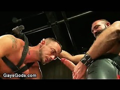 Bound to a metal horse with leather straps gay mouth fucked